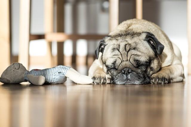 Auf dem Boden schlafen - Einschlaf-Ratgeber